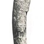 Музичні ударники з бивня мамонта. – Матеріали Мізинського музичного комплексу